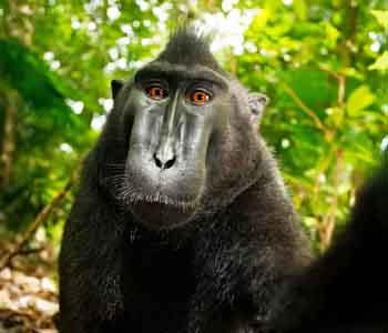 黑冠猴的360°无死角自拍,却360°揭露了最丑是人心