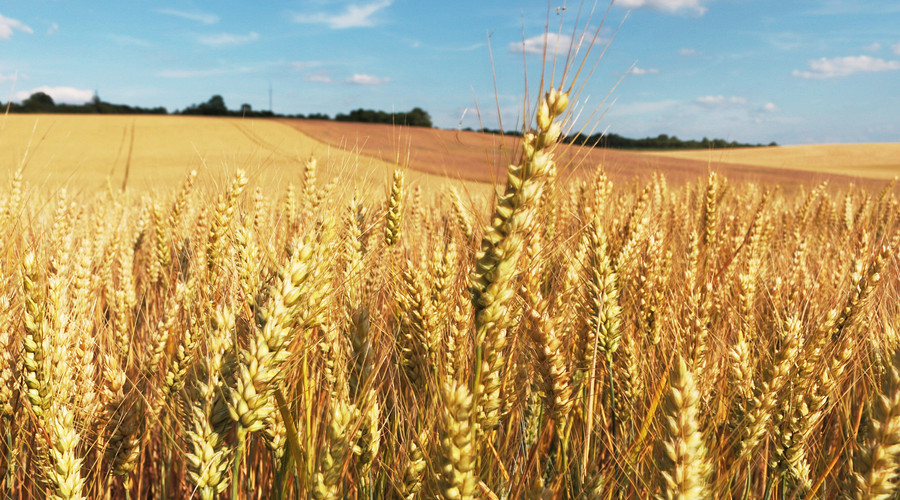 农产品供给体系建设资助项目申报开始了!最高资助100万!