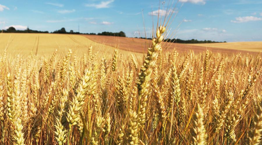 关于开展农业龙头企业奖励项目申报的通知