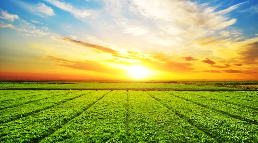 农业专利转让